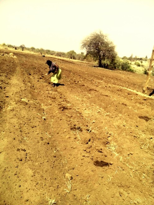 Preparing land for butternut farming